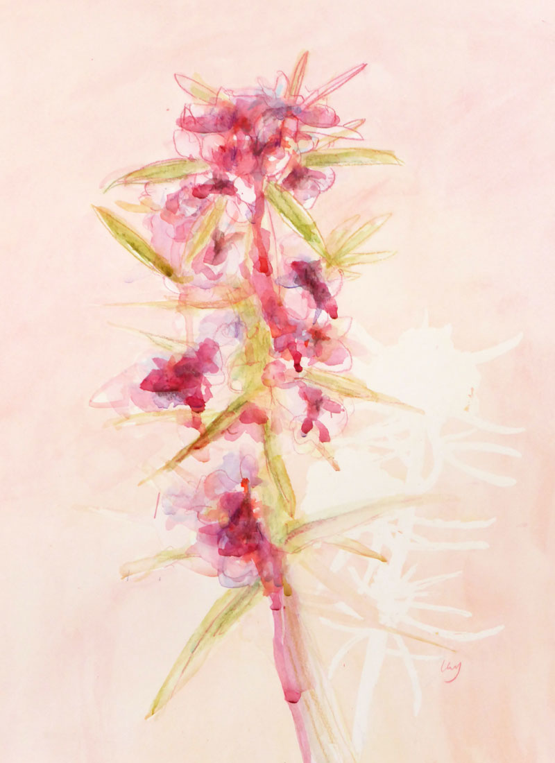 Pink confetti bush flower painting by Lucy Farmer.