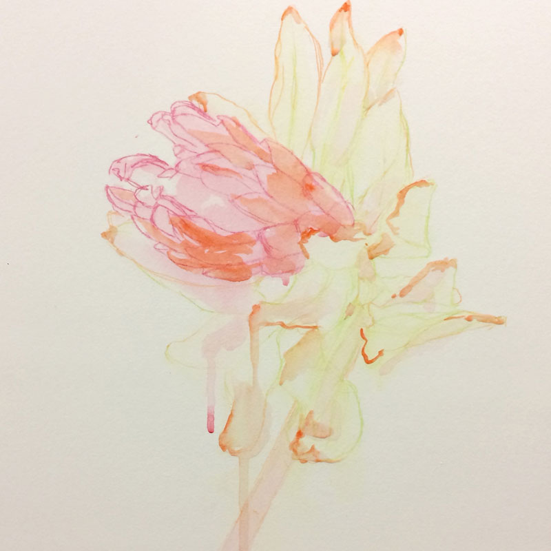 The outlines are drawn with watercolour pencil and then the watercolour paint is layered on.